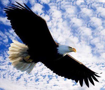 O Vôo da Águia – Por Riselda Morais